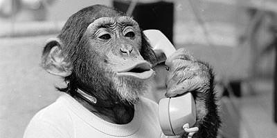 mono-al-telefono